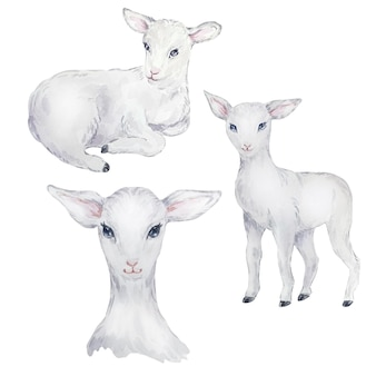 Watercolor illustration set of white lamb, easter image, portrait of a goat, delicate design element