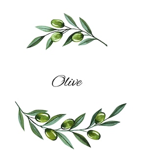 Watercolor illustration with olive branches and berries frame. floral illustration for wedding stationary, greetings, wallpapers, fashion and invitations.