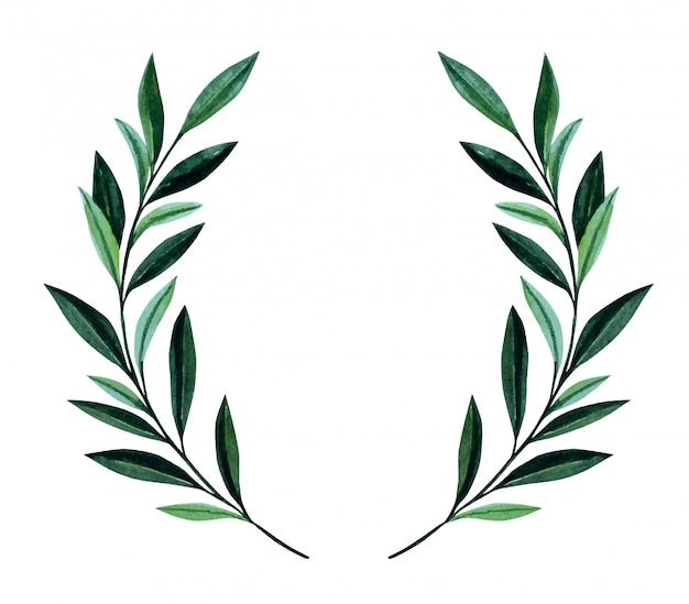 Watercolor illustration with olive branches.