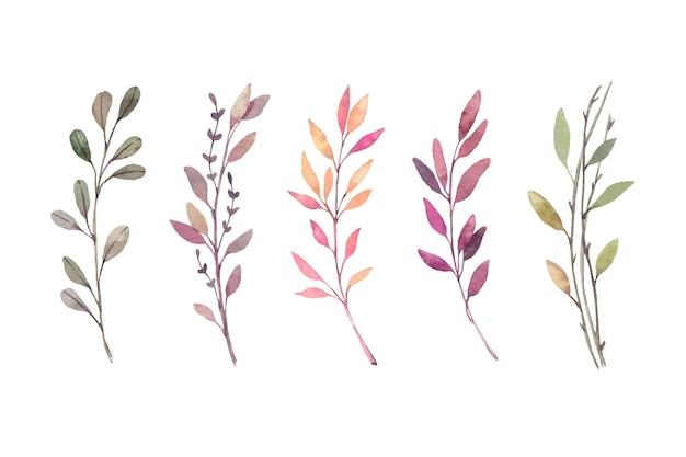 수채화 삽화. 가을 식물 클립 아트. 가 잎, 허브 및 가지 세트