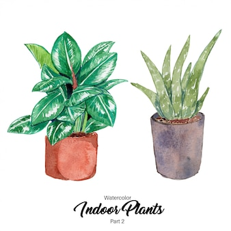 Watercolor indoor plants illustration