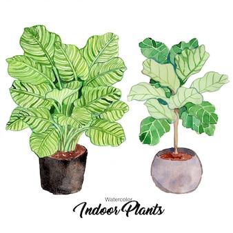 水彩屋内植物