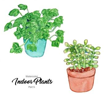 Watercolor indoor plants