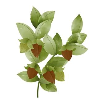 수채화 호호바 식물 그림