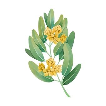 水彩ホホバ植物イラスト 無料ベクター