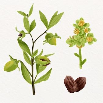 Watercolor jojoba plant and seed