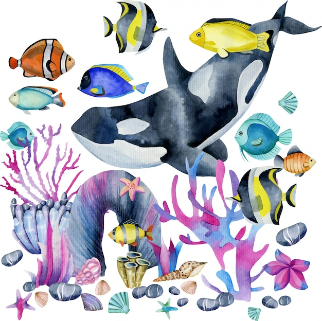 Watercolor killer whale and oceanic exotic fishes