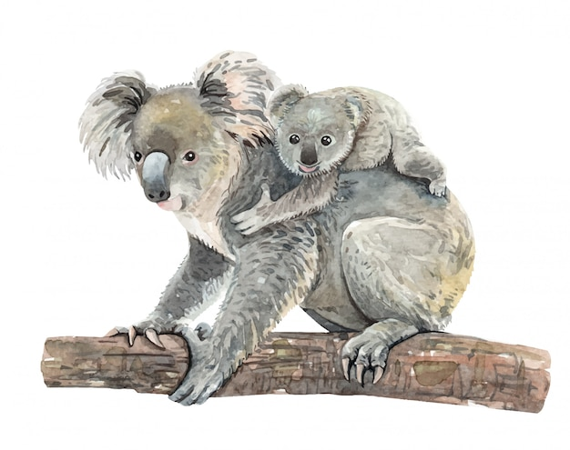 Watercolor koala and baby on branch