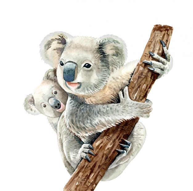 Watercolor koala and baby hang on branch.