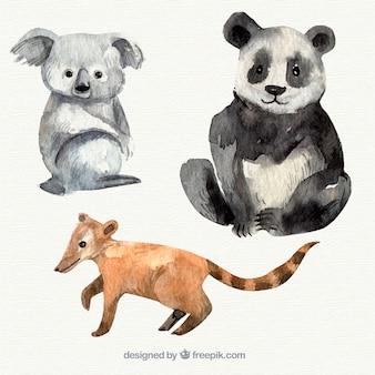 Watercolor koala, panda and lemur
