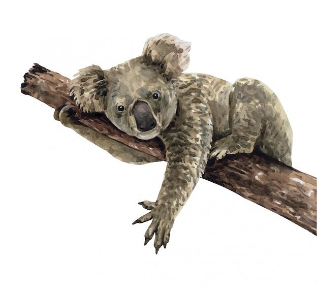 Watercolor koala on tree branch. koala paint.