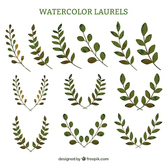 Watercolor laurel sprigs