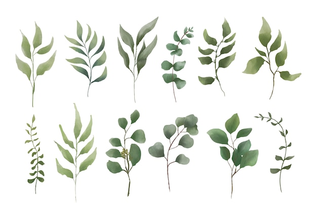 Watercolor leaf element collection
