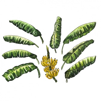 수채화 잎 컬렉션