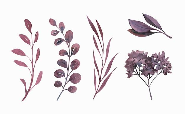水彩画の葉のコレクション。
