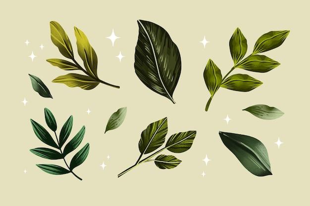Watercolor leaves design set
