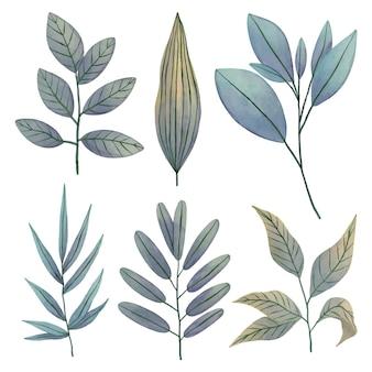 Insieme di disegno delle foglie dell'acquerello