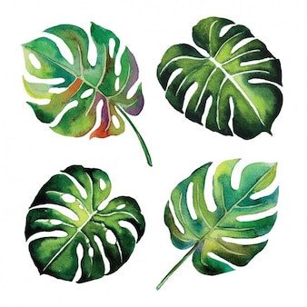 Watercolor leaves design