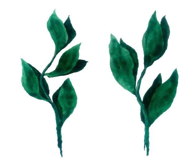 Акварель листья набор, изолированные на белом