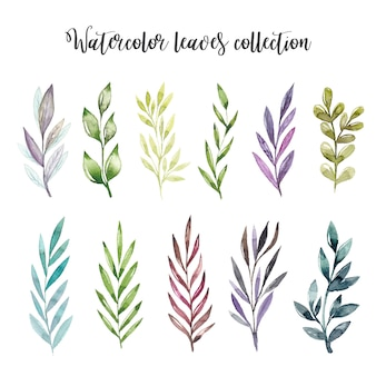 Watercolor leaves set
