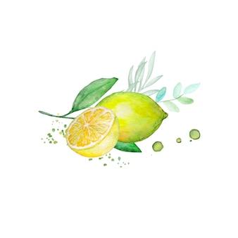 水彩レモンの枝と半分のレモン
