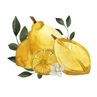 Watercolor lemon composition with leaves