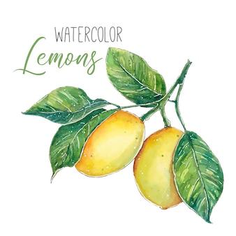 녹색 잎 지점에 수채화 레몬