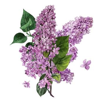 Акварель сиреневые цветы и листья сиреневый букет