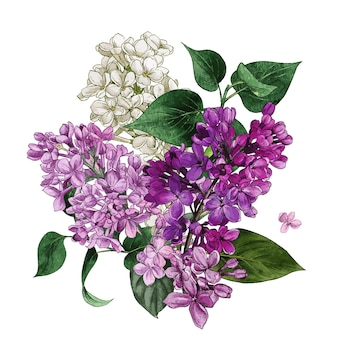 Watercolor lilac flowers and leaves lilac bouquet