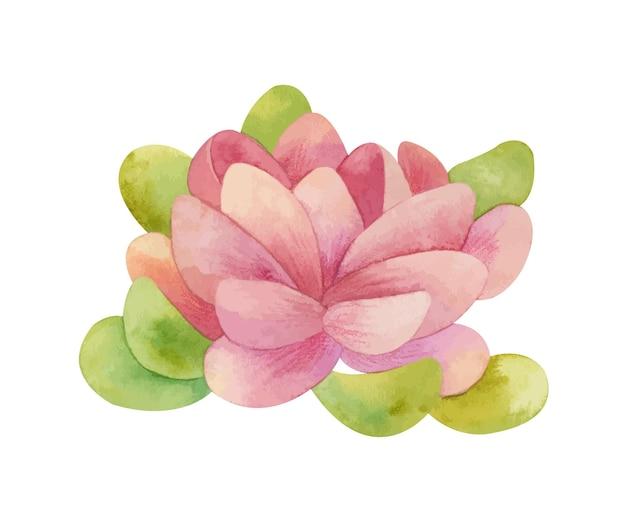 수채화 연꽃