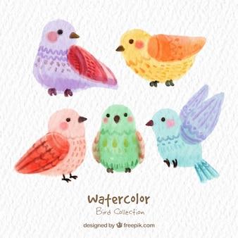 Acquerello graziosa collezione di uccelli