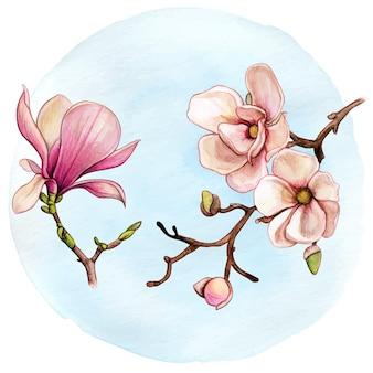 수채화 목련 분기 핑크 꽃