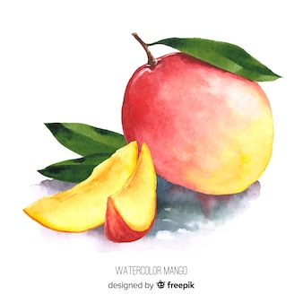 Watercolor mango illustration