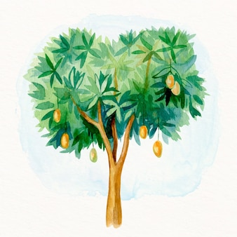Watercolor mango tree with fruits illustration