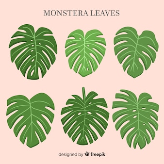 Watercolor monstera leaves set