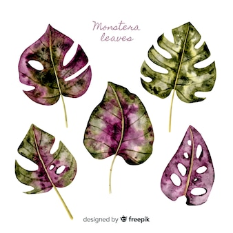 Watercolor monstera leaves
