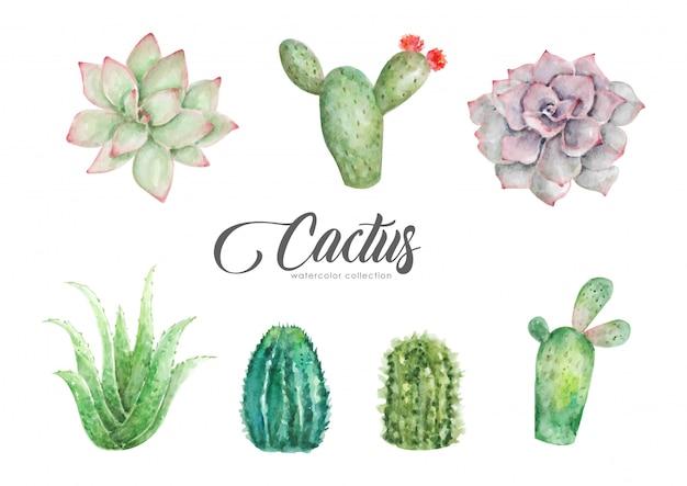 Акварель коллекции кактусов и алоэ вера