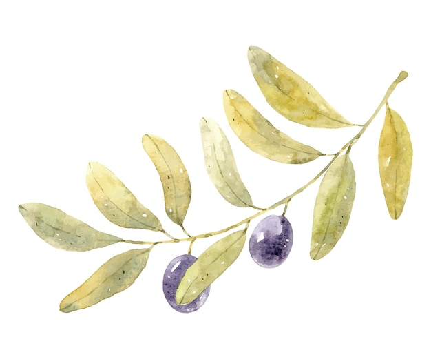 Watercolor olive branch