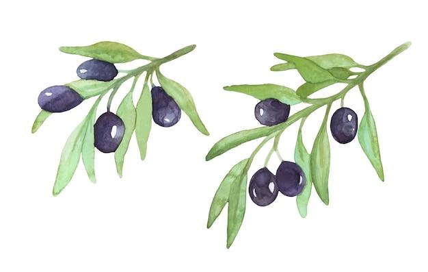 水彩オリーブの小枝果物とオリーブの枝