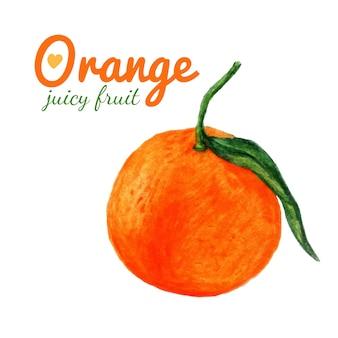Акварельные оранжевые фрукты. цитрусовые. последние акварельные картины из органических продуктов. свежие экзотические фрукты.