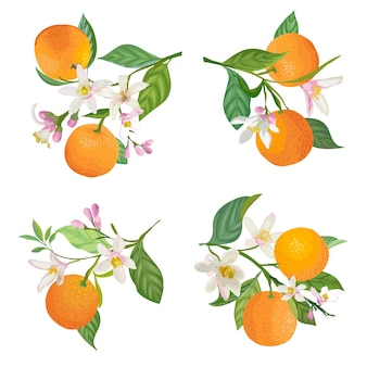 ポスター、夏の柑橘類のバナー、カバーデザインテンプレート、ソーシャルメディアの物語、春の壁紙のための葉と花で枝にぶら下がっている水彩オレンジ。ベクトルイラスト