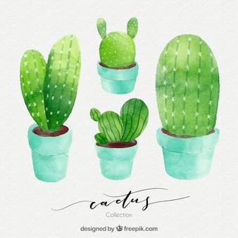 Акварельный пакет кактуса
