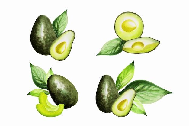 수채화는 아보카도 컬렉션을 그렸습니다. 손으로 그린 신선한 음식 디자인 요소가 분리되었습니다.