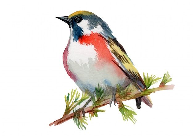 Watercolor painted beautiful bird on white background