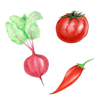 赤い野菜のイラストの水彩画のコレクション