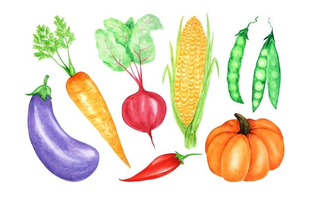 野菜の水彩画のコレクション。手描きの新鮮なビーガンフードのデザイン要素