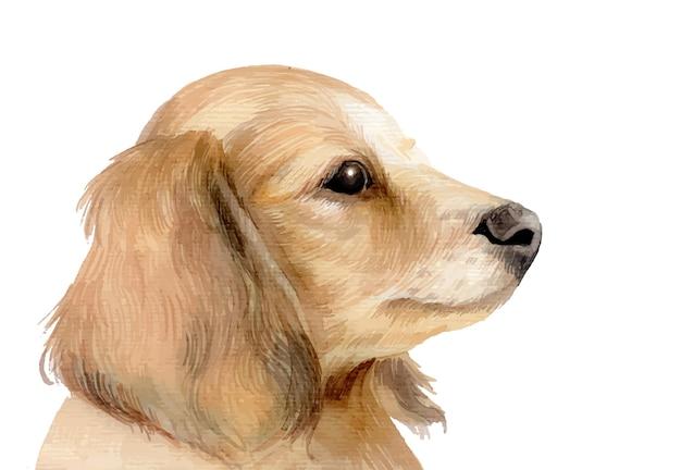 水彩塗りのかわいい犬