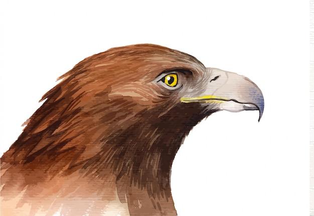 ワシの鳥を描いた水彩画