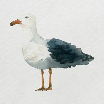Акварель нарисованная чайка на белом холсте