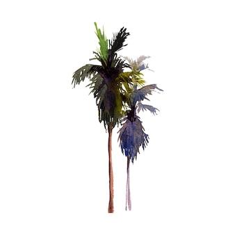 Акварель кокосовой пальмы с ветвями